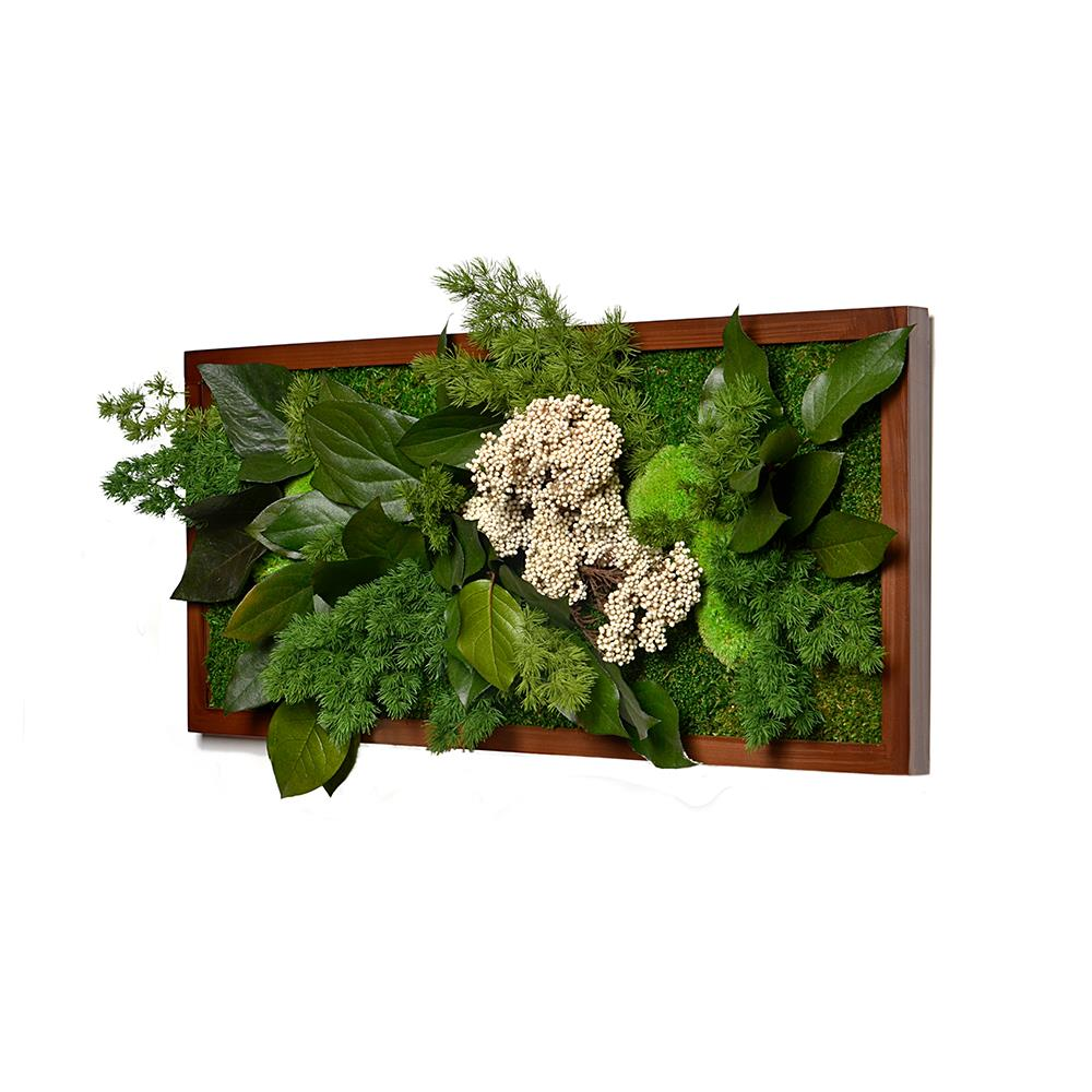 Natural plant board rectangle meta datas - Plants that dont need soil natures wonders ...